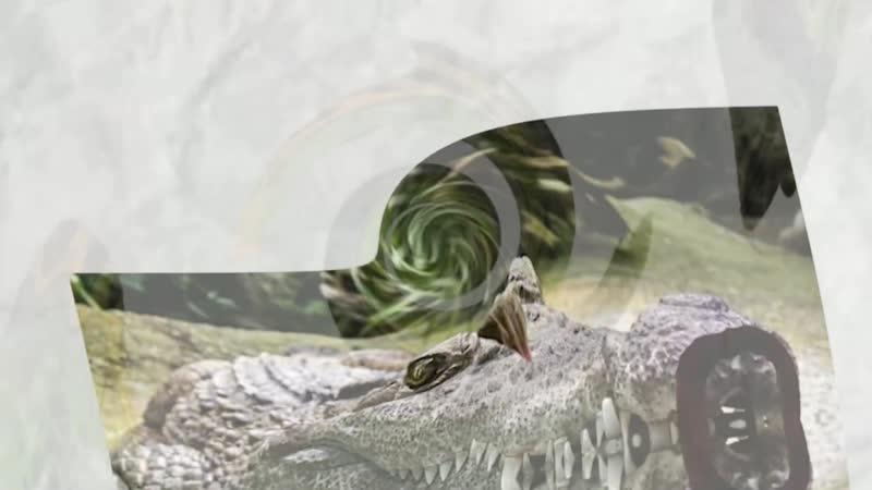 Крокодил Тарас Бульба