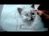 Как нарисовать котенка. Простой карандаш. Штрих. B, 6B, бумага для принтера