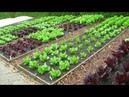 Бизнес идея из-за рубежа.Выращивание реальных овощей на виртуальном огороде