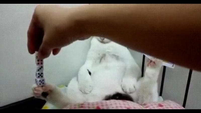 Кот познавший ДЗЕН