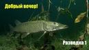 Рыбалка на Днепре Щука окунь во всей красе