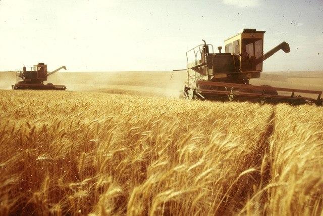Ростовская область собрала рекордные 8,5 миллионов тонн зерна
