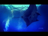 Гигантский Скат в глубоком море.Incredible Giant Manta in the Deep Sea. (Wonderful Chill Out Music).