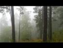 Прогулка в облаках 1200 м. над уровнем моря