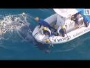 Спасли детёныша кита
