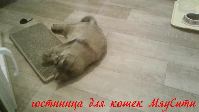 гостиница для кошек МяуСити Бусинка