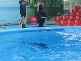 Минский дельфинарий