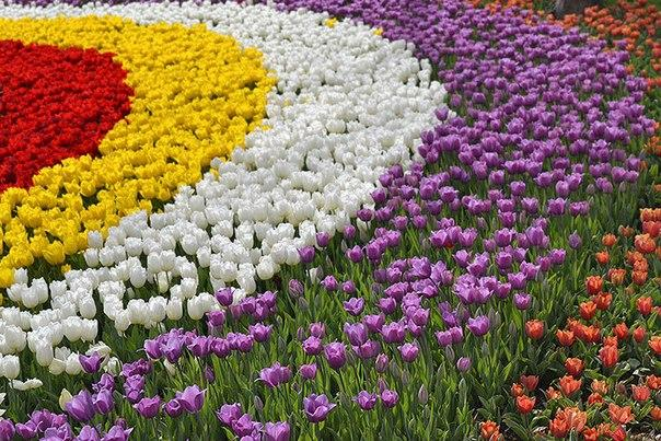 Фестиваль тюльпанов на Елагином острове FhU9xpA4rhQ