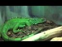 Контактный зоопарк Говорящий попугай Видео про животных