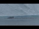 Humpback whales 5 9