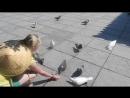 Кормление голубей.Китай.Хайнань !