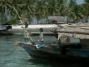 1989 Борнео Плавучие джунгли - Подводная одиссея команды Кусто