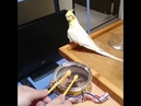 Parrot and drum