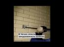 В Чечне спасли замурованного котёнка