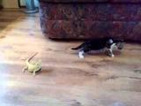 Котенок и ящерицы / Cat and Lizard