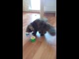 Ванесса Филимонова играет с бабочкой. Кошка играет с бабочкой.