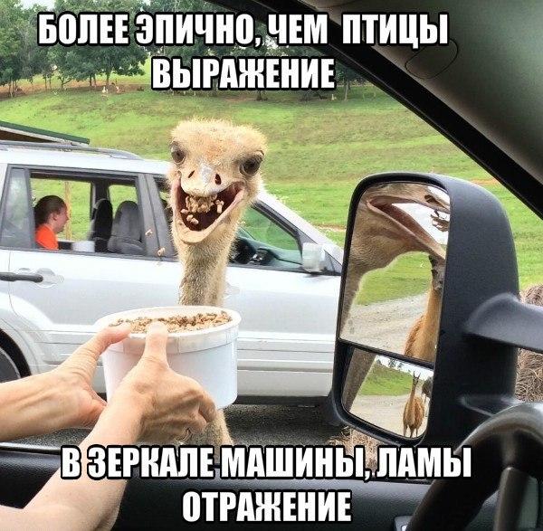 https://pp.vk.me/c543108/v543108926/2b7b/IBGc4cegNoQ.jpg