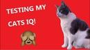 TESTING MY CATS IQ