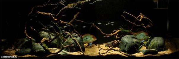 Конкурс дизайна биотопных аквариумов JBL 2014 AASGpACQElQ