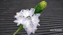 How to make nylon flower /ดอกไม้ผ้าใยบัว l แม่เนย น้องพอสDIY