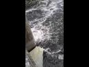 плотина в Домодедово