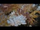 Глубины океана. Морские гиганты Азорских островов. Документальный фильм