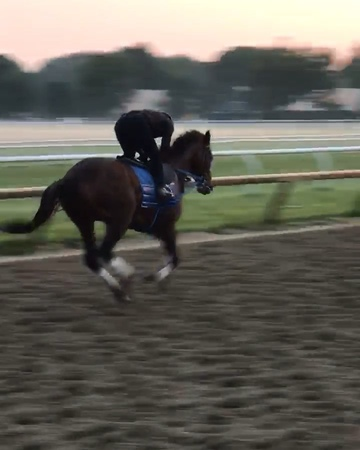 """Bolt dOro Official ⚡️ on Instagram """"Bolt galloping this morning at Saratoga . Now being trained by Steve Asmussen. Video creds- Mick Ruis boltdo..."""