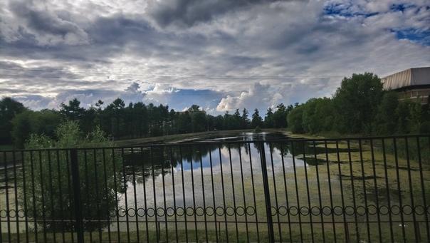 Красивый пруд. Один из трёх здесь. Этот называется Средний фермерский пруд. Названы так, потому что Пётр Великий тут экспериментировал и делал ферму по Голландскому образцу.  7 июля 2018