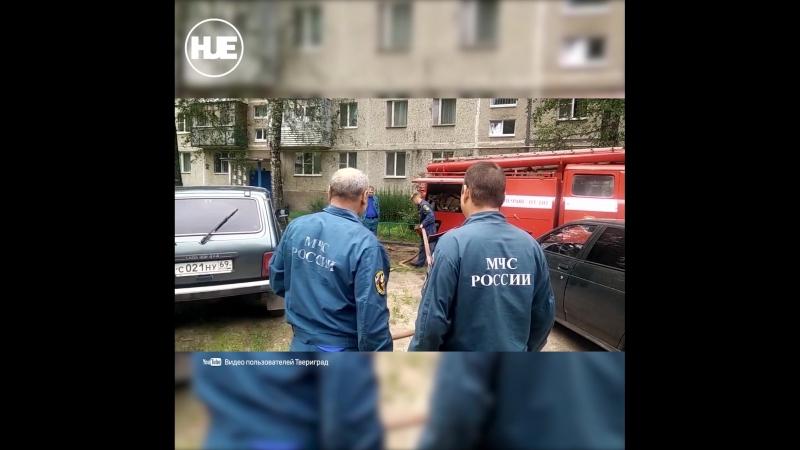 В Тверской области пожарные попытались снять кота с дерева струей воды