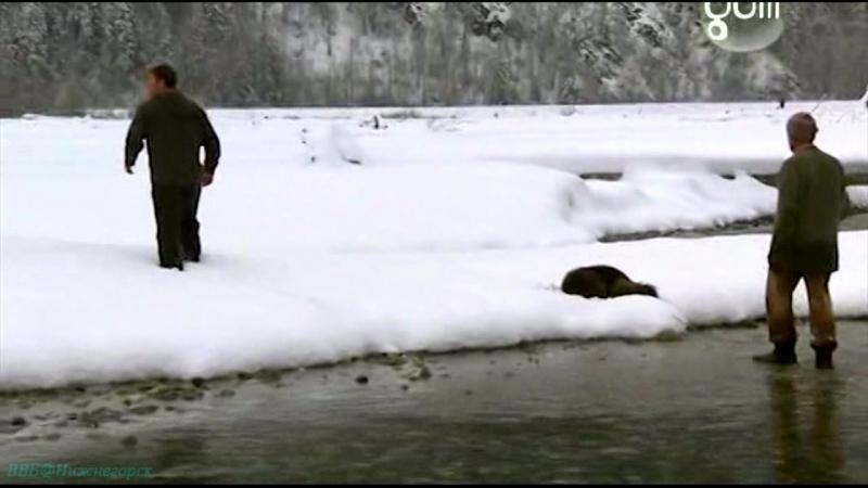 BBC «Самые опасные хищники (14). Аляска, США» (Познавательный, природа, животные, 2009)
