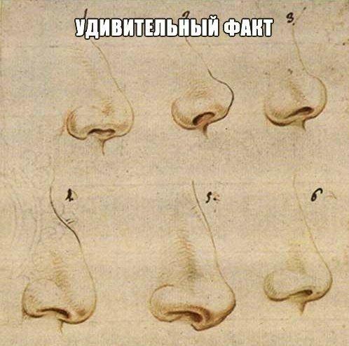 Шок! Обнаружен удивительный Факт!  Ученые: форма носа напрямую влияет на успешность человека По мнению специалистов, люди... Читать продолжение »