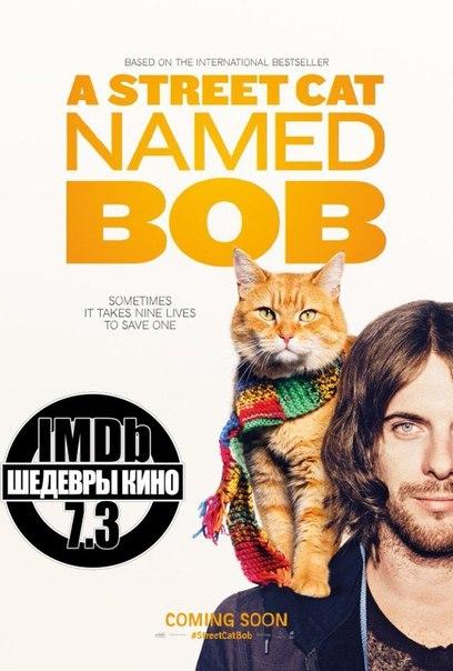 Реальная история, замечательный кот и необычный сюжет, подарит прекрасное настроение????