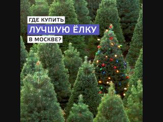 Где купить лучшую ёлку в Москве