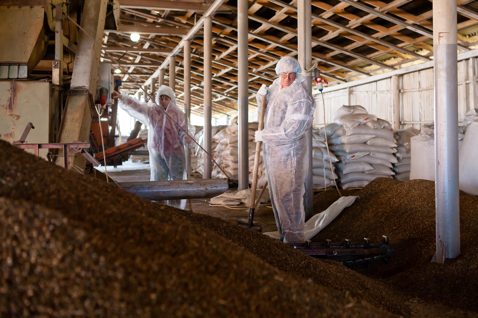 Сортировка гречки в зернохранилище