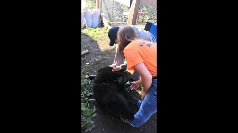 Меня покусал медведь