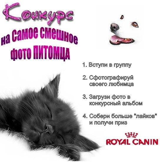 http://cs407120.userapi.com/v407120163/6cf1/EyInl_ZRhuo.jpg
