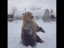Снежный душ для любимчика