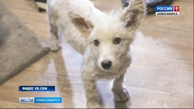 Новосибирцы всем миром спасли угодившего в гудрон щенка 1