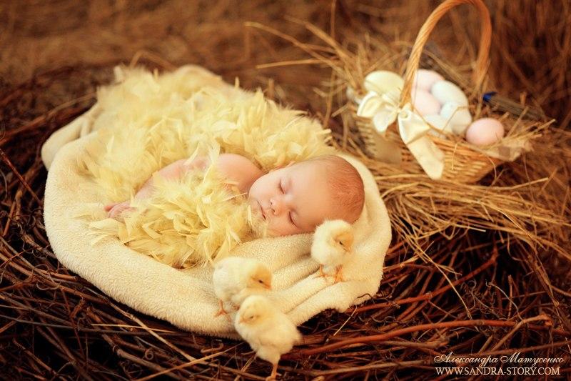 Новорожденный цыпленок открытка 69