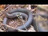 Интересные факты и истории - мифы о змеях