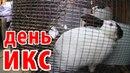 про село - рождение крольчат зимой реальная жизнь в русской деревне простая жизнь лпх