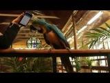 Хит Шнура про лабутены спас попугая от депрессии и самоощипывания