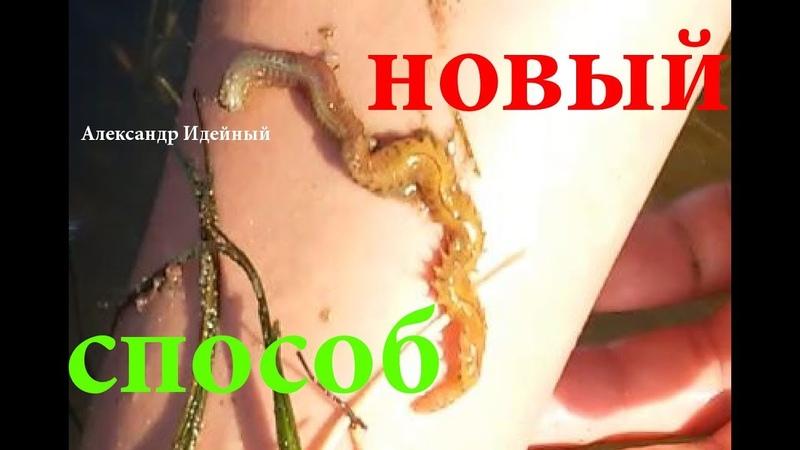 Где взять как копать искать найти поймать добыть накопать хранить лиманского морского червя нереис