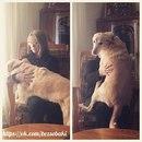 Если я не поглажу свою собаку, она пойдет к другому человеку…