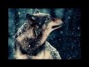 Т.Тишинская Волчица.mp4