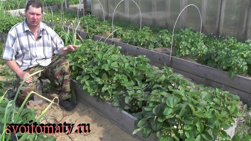 Как использовать кладовую фотосинтеза