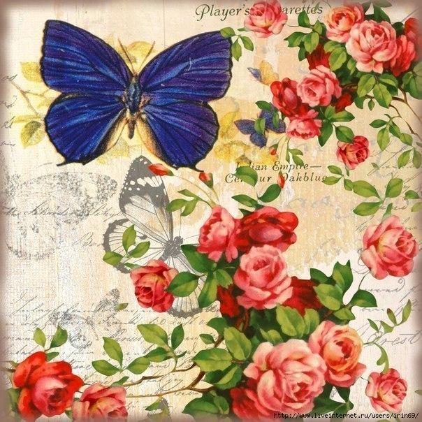 Картинки с бабочками для творчества (7 фото) - картинка