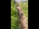 Video 631d15cb3ff0a581107c7df3254b6a76