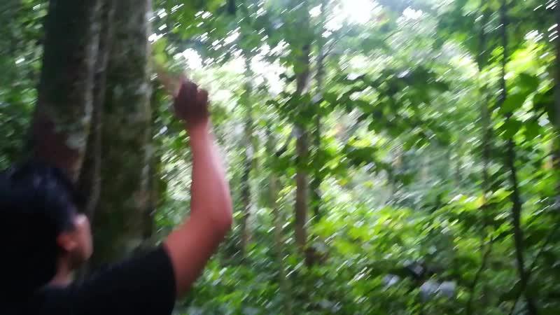 Бердвотчинг в Амазонии