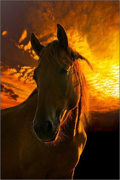 Закат и лошадь